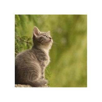 Kleines graues und weißes Kätzchen blickt bis zum Holzleinwand