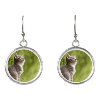 Kleines graues und weißes Kätzchen blickt bis zum Ohrringe