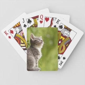 Kleines graues und weißes Kätzchen blickt bis zum Spielkarten