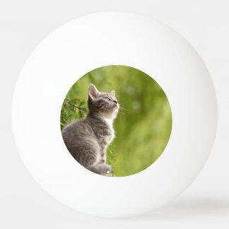 Kleines graues und weißes Kätzchen blickt bis zum Tischtennis Ball