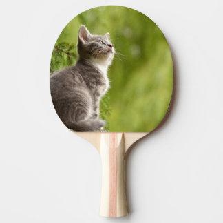 Kleines graues und weißes Kätzchen blickt bis zum Tischtennis Schläger