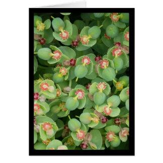 Kleines grünes Flora-Lied von Solenoid. 8:7 Karte