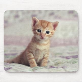 Kleines Ingwer-Kätzchen Mousepad
