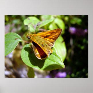 Kleines Kapitän-Schmetterlings-Plakat Poster