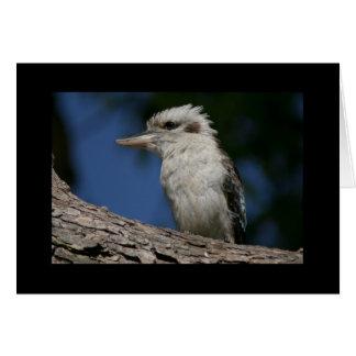Kleines kookaburra karte
