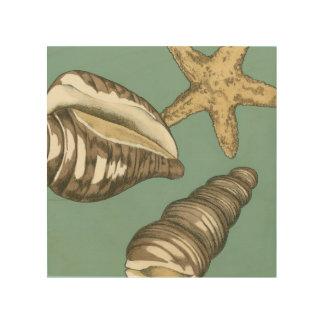Kleines Muschel-Trio auf aquamarinem Holzleinwand