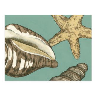 Kleines Muschel-Trio auf aquamarinem Postkarte