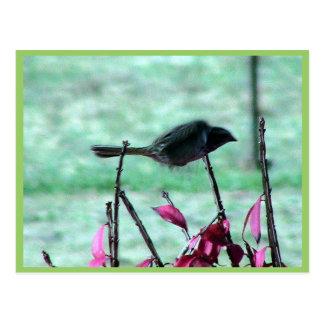 Kleines niedliches Spatzen-Fliegen in den Büschen Postkarte