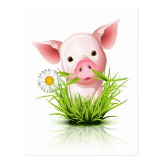 Kleines rosa Schwein im Gras Postkarte