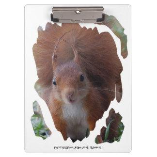 KLEMMBRETT Squirrel  Eichhörnchen ~ by JL GLINEUR