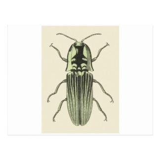Klicken-Käfer Postkarte