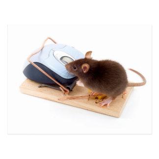 Kluge Maus Postkarte