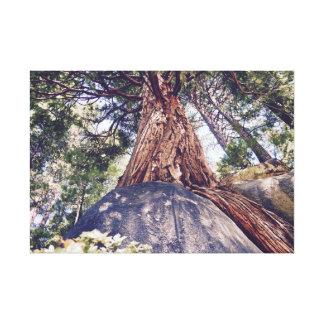 Kluger Baum 2 Leinwanddruck