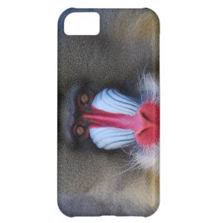 Kluger Mandrill Affe Hülle Für iPhone 5C