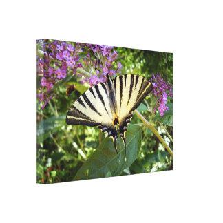 Knapper Frack-Schmetterlings-Leinwand-Druck Leinwanddruck