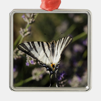 Knappes Frack (Iphiclides podalirius) Silbernes Ornament