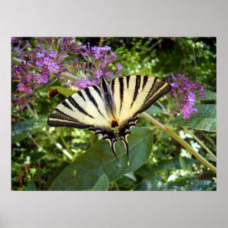 Knappes Frack-Schmetterlings-Plakat Poster