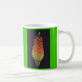 Kniphophia # 219 kaffeetasse