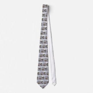 Knoblauch und Gewürze auf einem grauen Krawatte