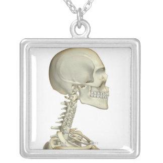 Knochen des Kopfes und des Halses 6 Versilberte Kette