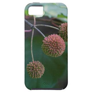 Knopf-Bush-Wildblume-Knospen Etui Fürs iPhone 5