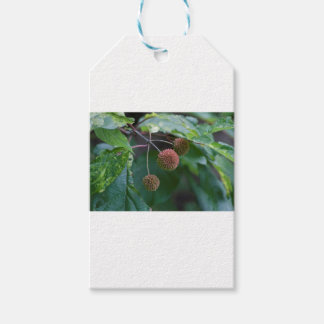 Knopf-Bush-Wildblume-Knospen Geschenkanhänger