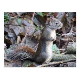 Knöpfen Sie die Douglas-Eichhörnchen-Postkarte Postkarte