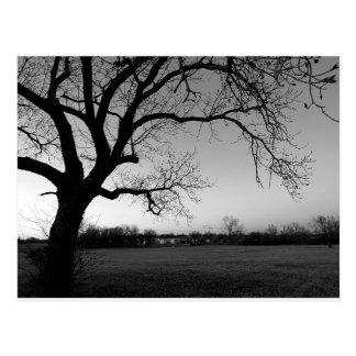 Knotige Baum-Postkarte Postkarte
