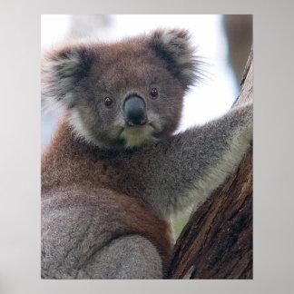 Koala-Bär Aussi Safari-FriedensLiebe-Natur-Schicks Posterdrucke