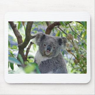 Koala-Bär in einem Baum Mousepad