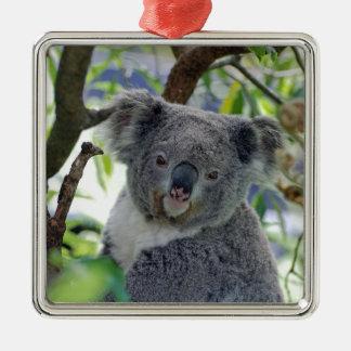 Koala-Bär in einem Baum Quadratisches Silberfarbenes Ornament