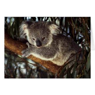 Koala-Bär Karte
