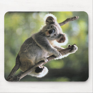Koala-Bär Mousepads