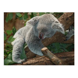 Koala-Bärn-Liebe-Tier-Schicksals-Geschenke Postkarte