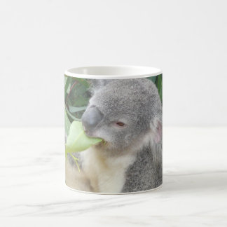 Koala, der Gummi-Blatt isst Kaffeetasse