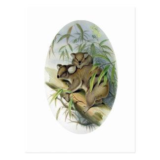 Koala-Illustration Postkarte