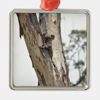 KOALA IM BAUM QUEENSLAND AUSTRALIEN QUADRATISCHES SILBERFARBENES ORNAMENT
