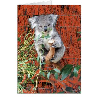 Koala-Imbiss-Zeit Karte