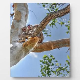 KOALA IN DEN BAUM-AUSTRALIEN-KUNST-EFFEKTEN FOTOPLATTE
