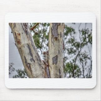 KOALA IN DEN BAUM-AUSTRALIEN-KUNST-EFFEKTEN MAUSPADS