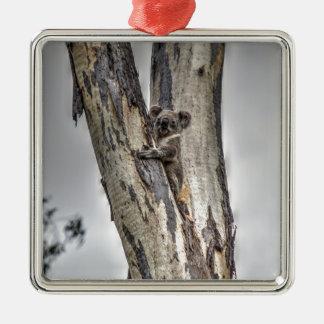 KOALA IN DEN BAUM-AUSTRALIEN-KUNST-EFFEKTEN QUADRATISCHES SILBERFARBENES ORNAMENT