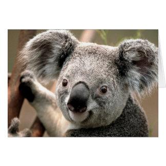 Koala Karte