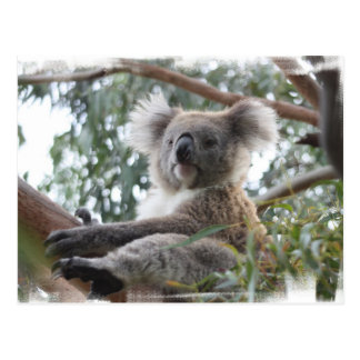 Koala-Postkarte Postkarte