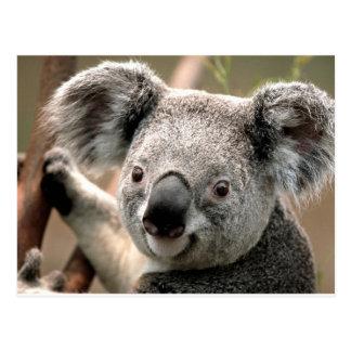 Koala Postkarten