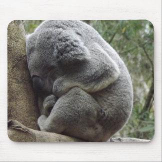 Koala-Schlummer-Mäusematte Mousepad