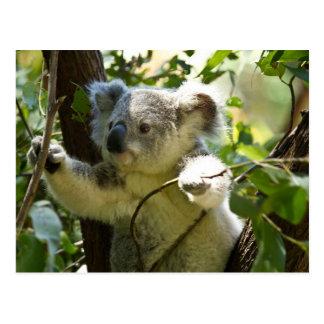 Koala-Süsse Postkarte