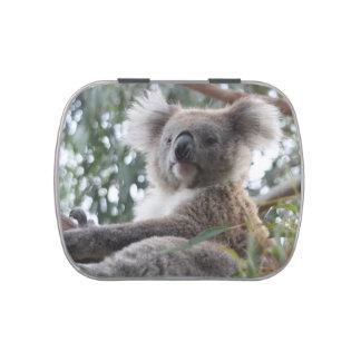 Koala Vorratsdose