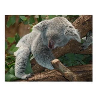 Koalabär so niedlich postkarten