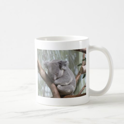 Koalabär Kaffeehaferl