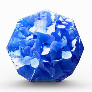 Kobalt-BlauHydrangea Acryl Auszeichnung